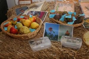 Eine Auswahl der Sortenvielfalt von Edith und Robert Bernhard (Foto Umweltschutzgruppe Vinschgau)