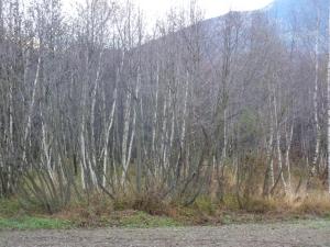 Lichtenberger Au (Foto Umweltschutzgruppe Vinschgau)