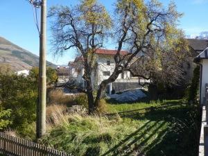 Die Palabirn-Bäume in Lichtenberg nehmen Abschied und keiner hört zu.