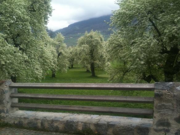 Ob es die letzte Blütenpracht der Palabirn-Bäume in Lichtenberg war?